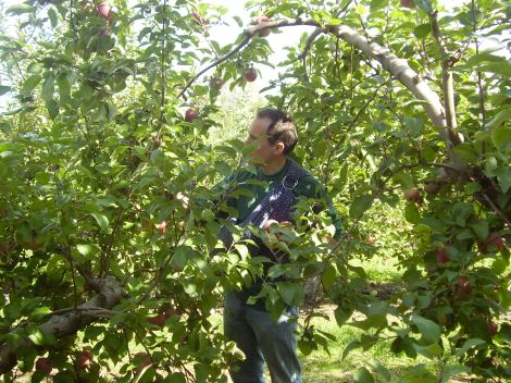 If you look closely to this picture you will see that the thing I have around me is a baby sling.  There is a baby in there, but I am also using it to help me hold the apples I pick. I am such a good dad. Here baby, hold these apples that are bigger than your head.